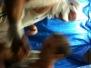 Rugby: Vientiane 10s 2011